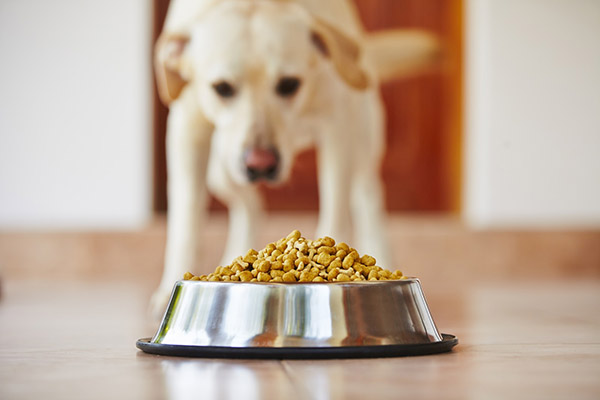 Caramel Colour for Pet Foods